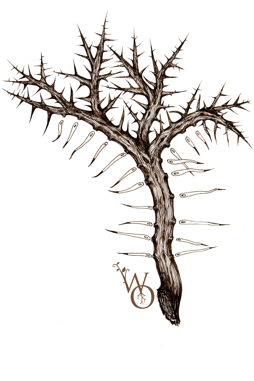 hawthorn needle origin illustration